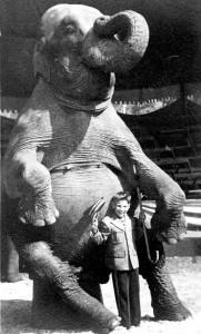Elefant în șezut alături de un băiat