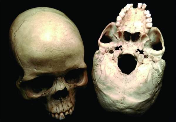 Cranii umane