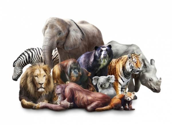 Familia mamiferelor