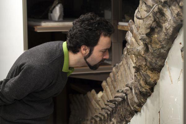 Oamenii de știință caută celule de dinozaur