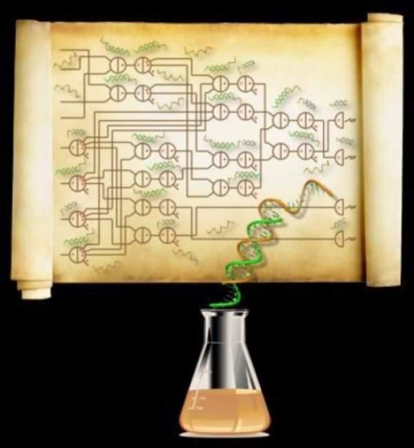 Calculatoarele organice pe bază de ADN