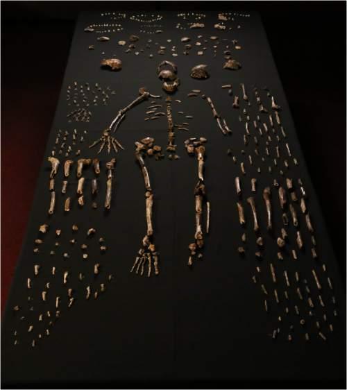 Fosile Homo Naledi