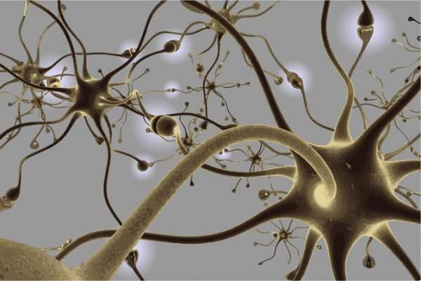 Rețea neuronală din creier