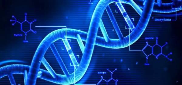 Terapia cu gene împotriva îmbătrânirii