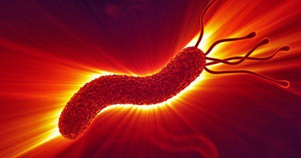 Forme de viață microbiană