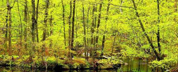 Pământul devine tot mai verde