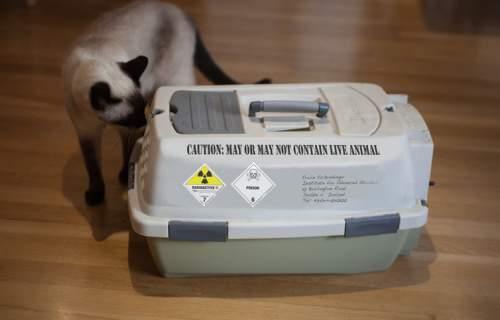 Experimentul mental cu pisica lui Schrodinger