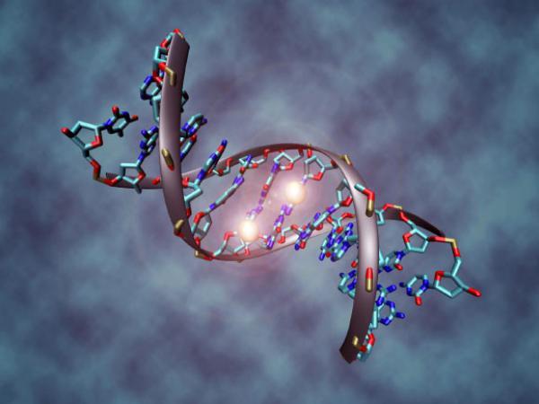 Molecula ADN