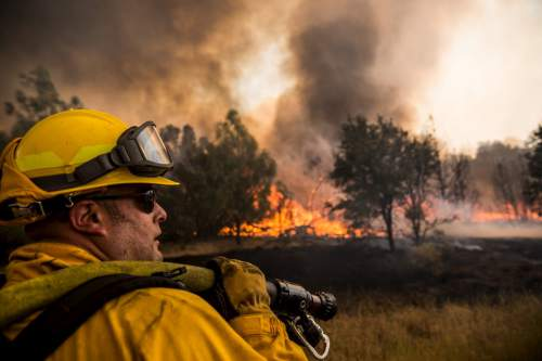 Incendii de pădure