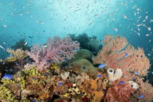 Oceanele vor deveni mai acide la tropice