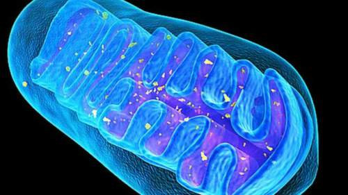 Mitocondrie