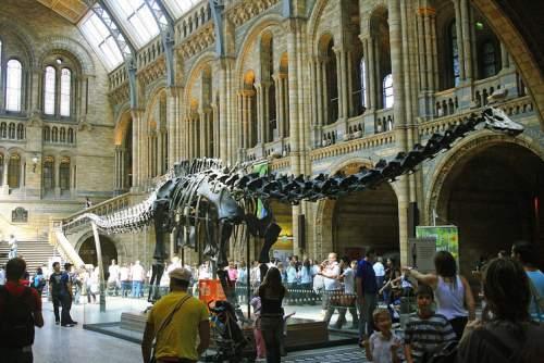 Diplodocus la Natural History Museum din Londra