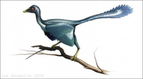Reconstituirea unui Archaeopteryx