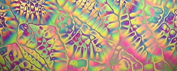 Cristale lichide