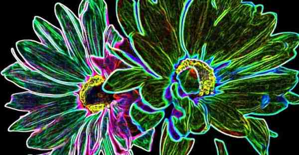 Plante electrice