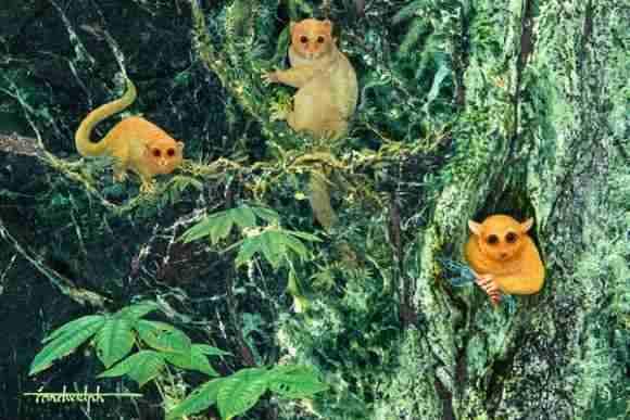 Noi specii de primate Omomyinae