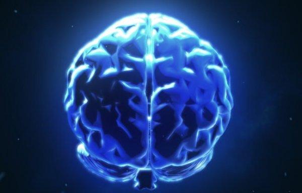 BrainNet