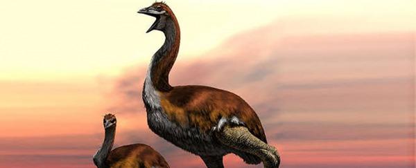 Vorombe titan-cea mai mare pasăre