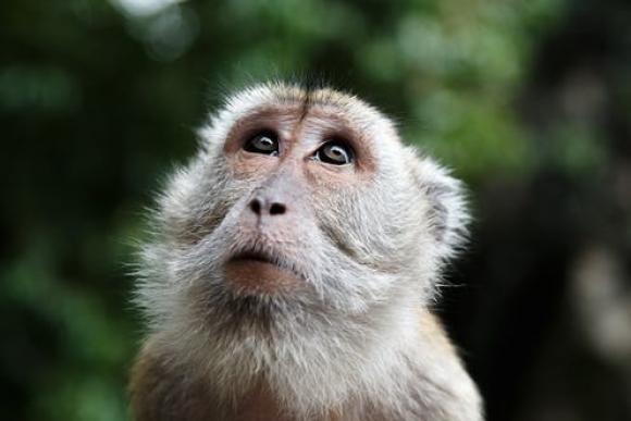 Concepții greșite despre evoluția speciilor