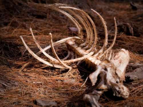 Dispariția speciilor de animale