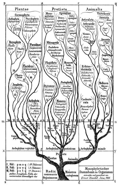 Arborele vieții în concepția lui Ernst Haeckel
