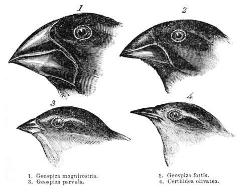 Cintezele lui Darwin
