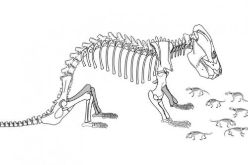 Fosilele de Kayentatherium și a puilor săi
