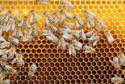 Grija parentală a condus la dezvoltarea familiilor de albine, furnici și termite