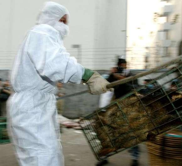 Ofițeri guvernamentali confiscă civete pentru a preveni epidemia SARS