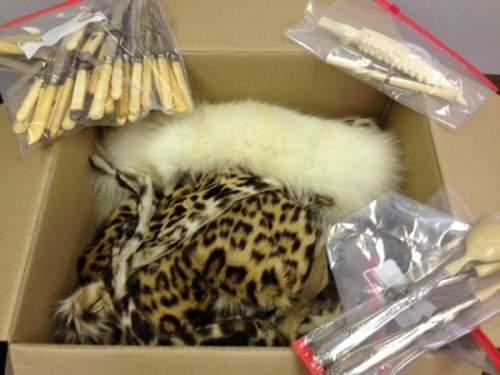 Piele de leopard și fildeș de contrabandă