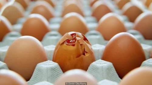 Boranii miros precum ouăle putrezite