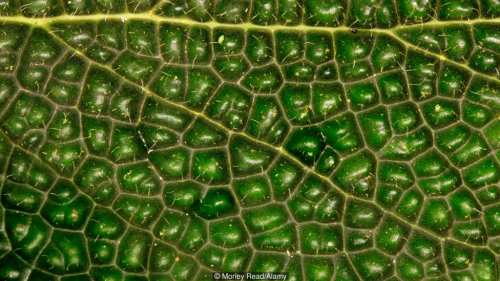 Fotosinteza pare simplă