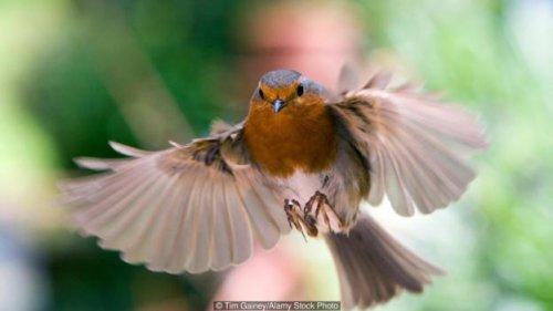 Sistemul nervos le transmite pasarilor directia in timpul migratiilor
