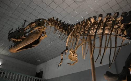 Tiranozaurii