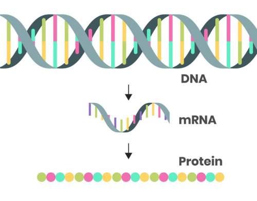 ADN-ARNm-Proteine
