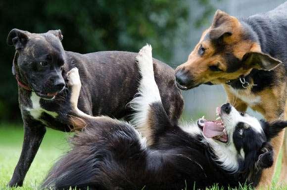 Animalele râd