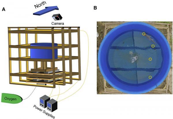Efectul câmpurilor magnetice asupra direcției de înot a rechinilor