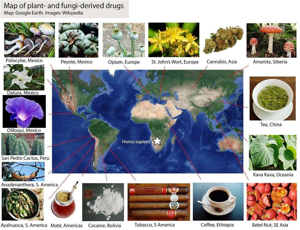 Originea drogurilor