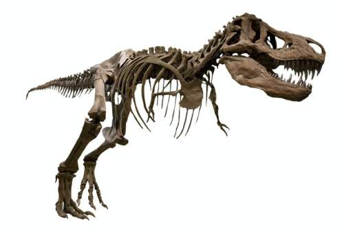 Scheletul unui dinozaur T. Rex